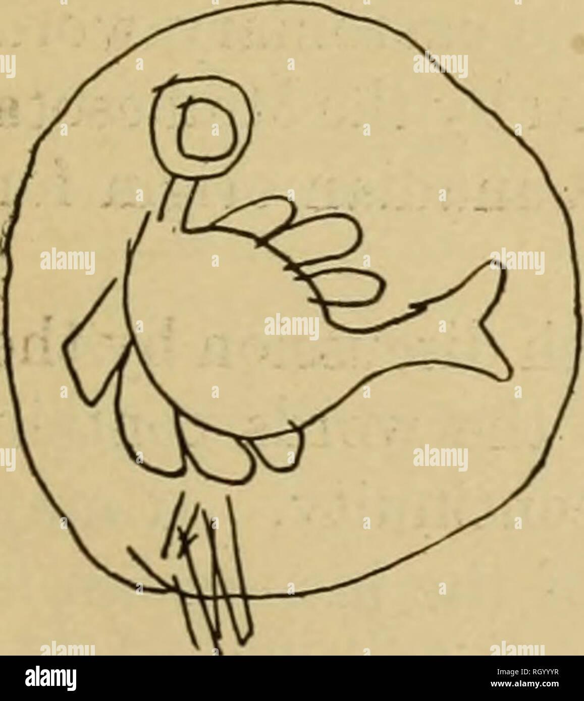 """. Boletín. Etnología. Wadjiwing^ desde debajo de la colina EnManwewidaman^ mi voz resuena sucesivamente canción foto no. 39. El baile comienza con esta canción y continúa durino- en este dibujo el resto de la serie. """" T """"^""""^^^''^ """" Nº 40 (catálogo No. 31) m^ ^ ^^. La imagen de la canción no. 40. En este dibujo el círculo representa la tierra; observe el interrumpir- ción del círculo en la parte inferior palabras Anawi'na -yo me causará ap- Nimo'kiwina' j pear Tibickoka^mig que está debajo de la tierra Ebigwen^^ """"1,,, , ^^ . Anawi'na ^ li"""" h '^^^kinina """" Nimo' J Foto de stock"""