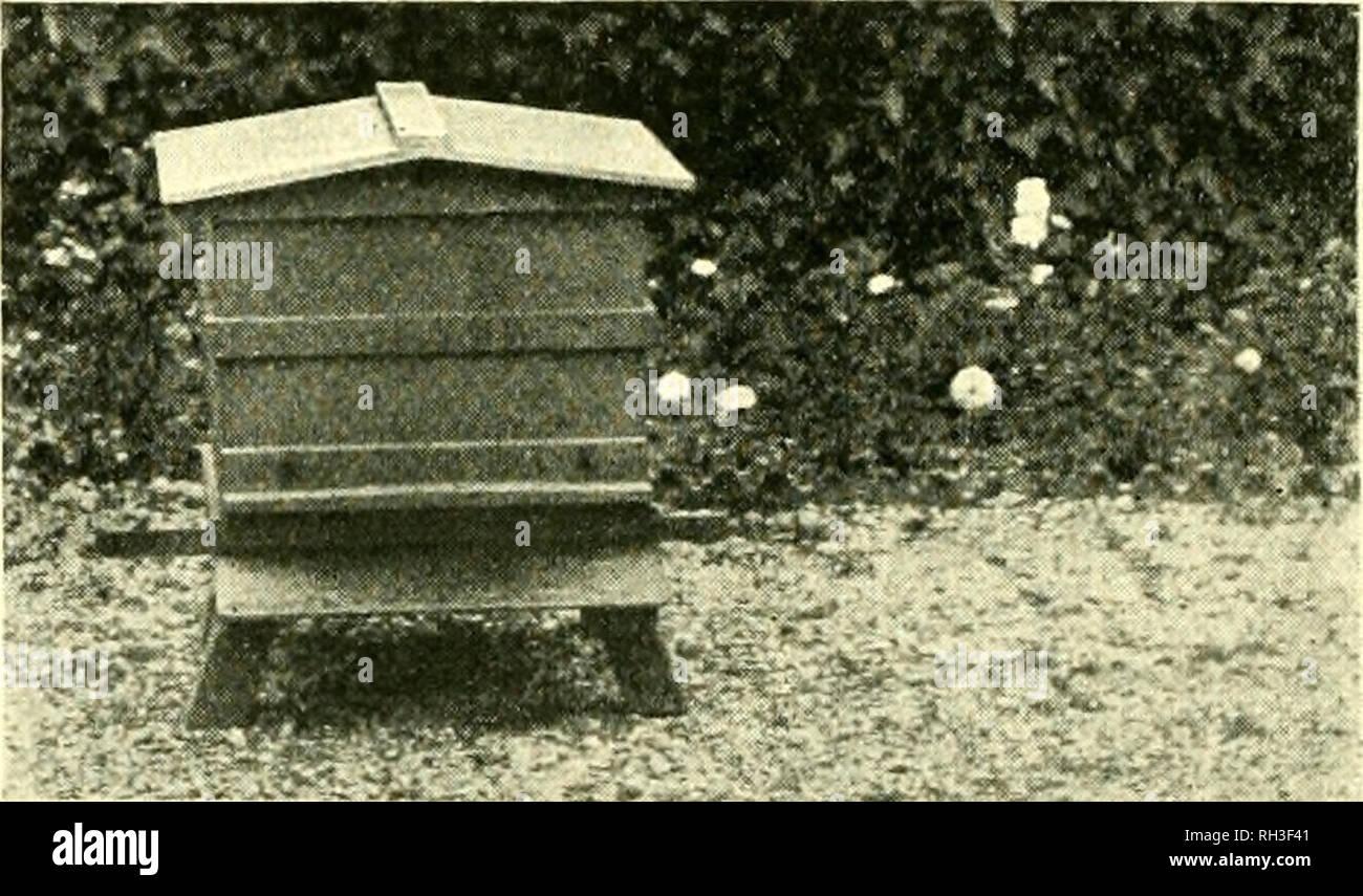 . British bee journal &Amp; asesor de los apicultores. Las abejas. FIG. 2. Localizar jaosition y no de la colmena, de forma que si se mueve toda la distancia cuando ocupado trabajando, un buen número se perdería. La harina se usa para hacer que las abejas tienen todas el mismo olor, ya que es por el olor que se reconozcan mutuamente y, por lo tanto, amalgamar pacíficamente. Los apicultores SomC'.. FIG. 4. Use el jarabe, en el que se mezcla la menta u otros olores, para pulverizar las abejas. Esto hace que un derrame pegajoso y es muy probable que induzcan al robo. La harina es recogida y utilizada como el polen. Aunque no siempre se hace, lo más seguro es jaula, la reina i Imagen De Stock