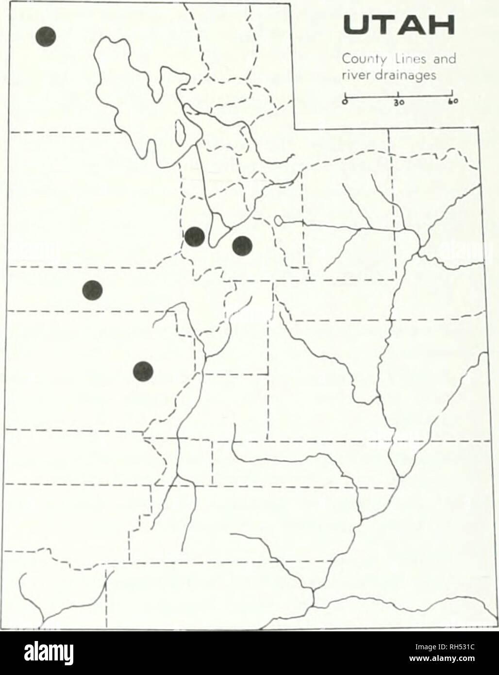 . Brigham Young University Science Bulletin. Biología -- publicaciones periódicas. Colocar;. 10. Cryptmttha uffiiii.s Las características más evidentes de esta especie son los obhquely nutlets comprimido que se traducen en la posición excéntrica de la ranura. Caché Co., a 10 millas de Smithfield Canyon, Hobson &Amp; Piranian 13775 (UTC); Inten'ale, Spring Hollow, B .Iaguire 1.38.39 (UTC); White Pine Lake, B. Maguire 16256 (UTC); Logan Canyon, el resorte hueco, B. Ma- guire 13778 (UTC); Daggett Co., Flaming Gorge, L. William.s 473 (UTC); Duchesne Co., 10 millas al norte de Altonah, J. Brotherson 646 (BRY); Juab Co., Gran Foto de stock