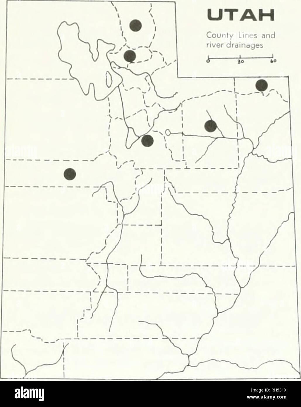 """. Brigham Young University Science Bulletin. Biología -- publicaciones periódicas. 12 Jóvenes Brioham Univebsitv Science Bulletin County líneas y drenajes fluviales I 1 30 b"""". Colocar;. 10. Cryptmttha uffiiii.s Las características más evidentes de esta especie son los obhquely nutlets comprimido que se traducen en la posición excéntrica de la ranura. Caché Co., a 10 millas de Smithfield Canyon, Hobson &Amp; Piranian 13775 (UTC); Inten'ale, Spring Hollow, B .Iaguire 1.38.39 (UTC); White Pine Lake, B. Maguire 16256 (UTC); Logan Canyon, el resorte hueco, B. Ma- guire 13778 (UTC); Daggett Co., Flaming Gorge, William L. Foto de stock"""