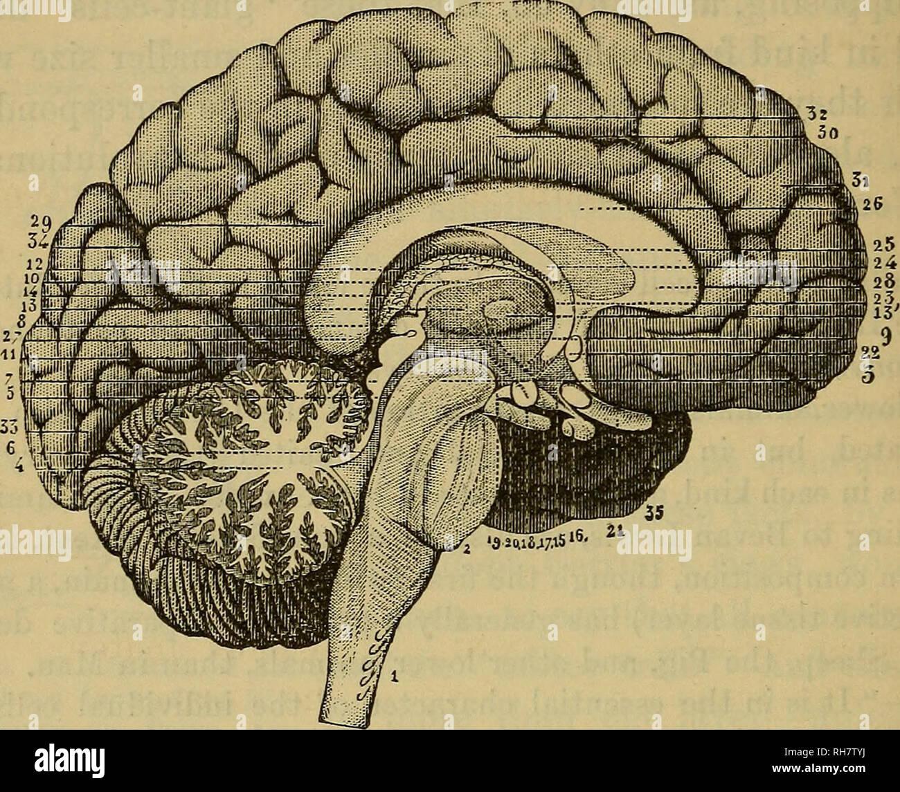El Cerebro Como órgano De La Mente Cerebro El Pensamiento