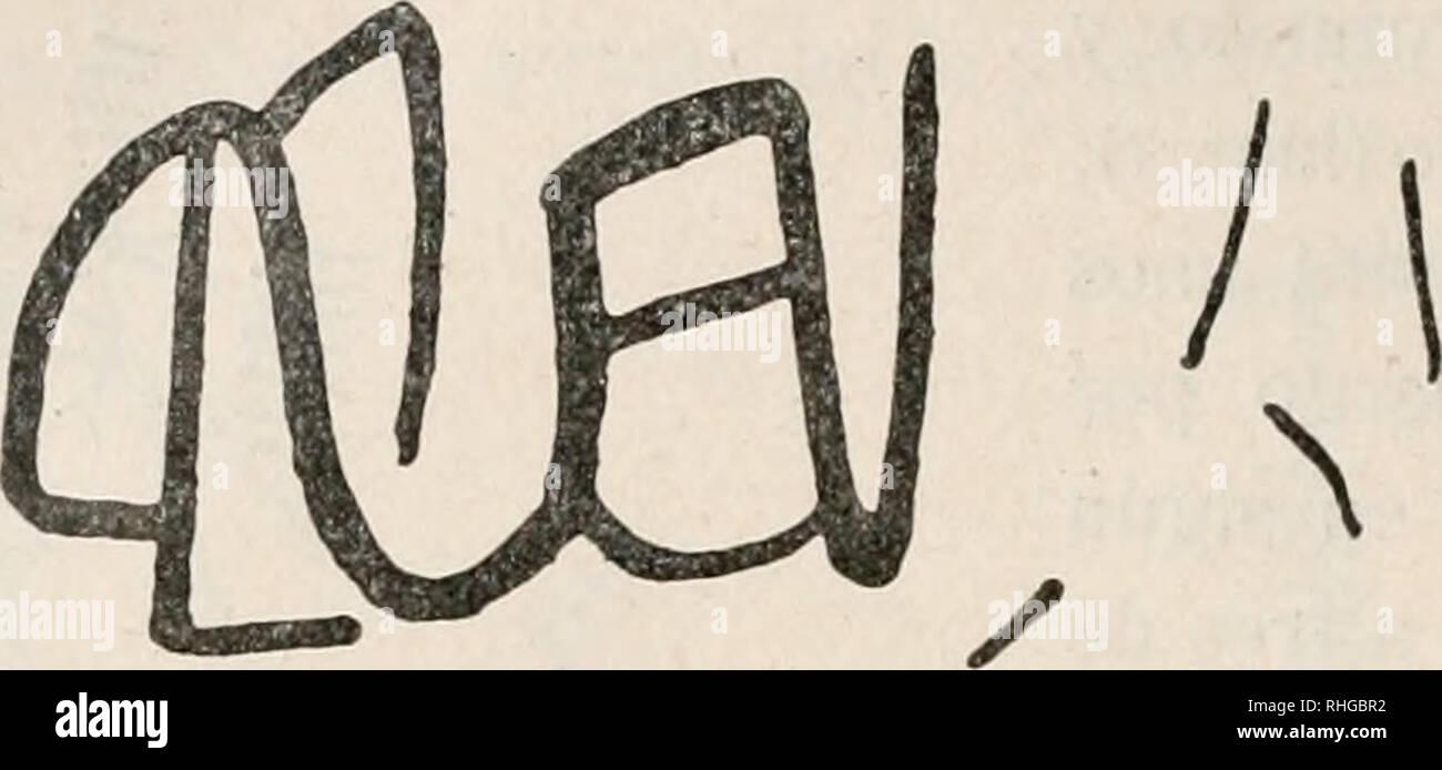 . Boletín de la Sociedad Española de Historia Natural. Historia natural. 1-24 boletín de la Real Sociedad Española dólmenes y túmulos.-Los dólmenes que en el país, como en Portugal, llaman antas, están repartidos por todo el territorio, pero donde más abundan es en el término de San Vicente de Alcántara por los terrenos graníticos, roca que se presta mucho mejor que la cuarcita a obtener piezas grandes y apropiadas para construirlos. Fig. 6.^-Signo pintado en el abrigo de la Esperanza (Portugal), región fronteriza de Alburquerque. Entre los mejor conservados están los fotografiados por D. José Foto de stock