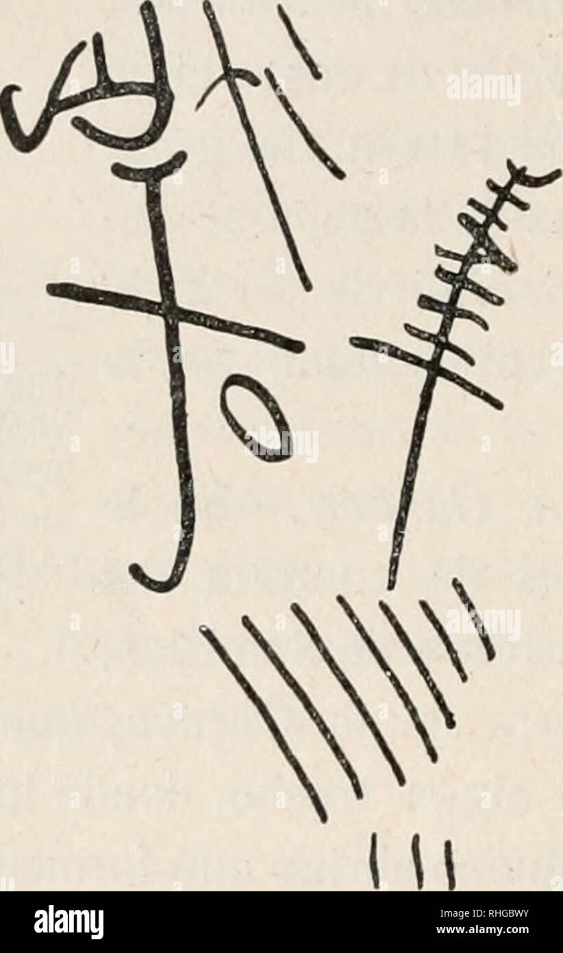 . Boletín de la Sociedad Española de Historia Natural. Historia natural. 122 boletín de la Real Sociedad Española La Piedra de las herraduras, y creen en el país que allí están grabados desde tiempo inmemorial los hierros con que los antiguos ganaderos acostumbraban a marcar sus reses. Actualmente está obteniendo el Sor Cabrera calcos y planos de esta curiosa peña. Conviene advertir que aun en la actualidad, quizá siguiendo una tradición remotísima los pastores de esta comarca, esencialmente ganadera, a veces siguen grabando en la piedras las marcas de la liga. . Por favor tenga en cuenta que estas imágenes son Foto de stock