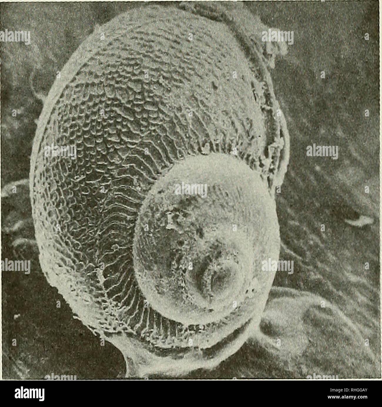 . Boletin de la Sociedad de Biología de Concepción. Sociedad de Biología de Concepción; Biología; y la biología. Bol. Soc. Biol. Concepción, Chile. Tomo 65, 1994. concordancia entre la gran abundancia de larvas en abril, mayo y junio de 1991 (Tabla III), con la temporada de más alto asentamiento detectado en Ramuntcho (Tabla IV). Además, el bajo número de larvas/m', encontrado en 1992, correspondió a un escaso asentamiento en ese mismo año. TABLA IV. Número promedio de asentados por m- y sus desviaciones standares de C. concholepas en el intermareal de Ramuntcho (Bahía San Vicente). 1990-1992. Mes 1 Foto de stock