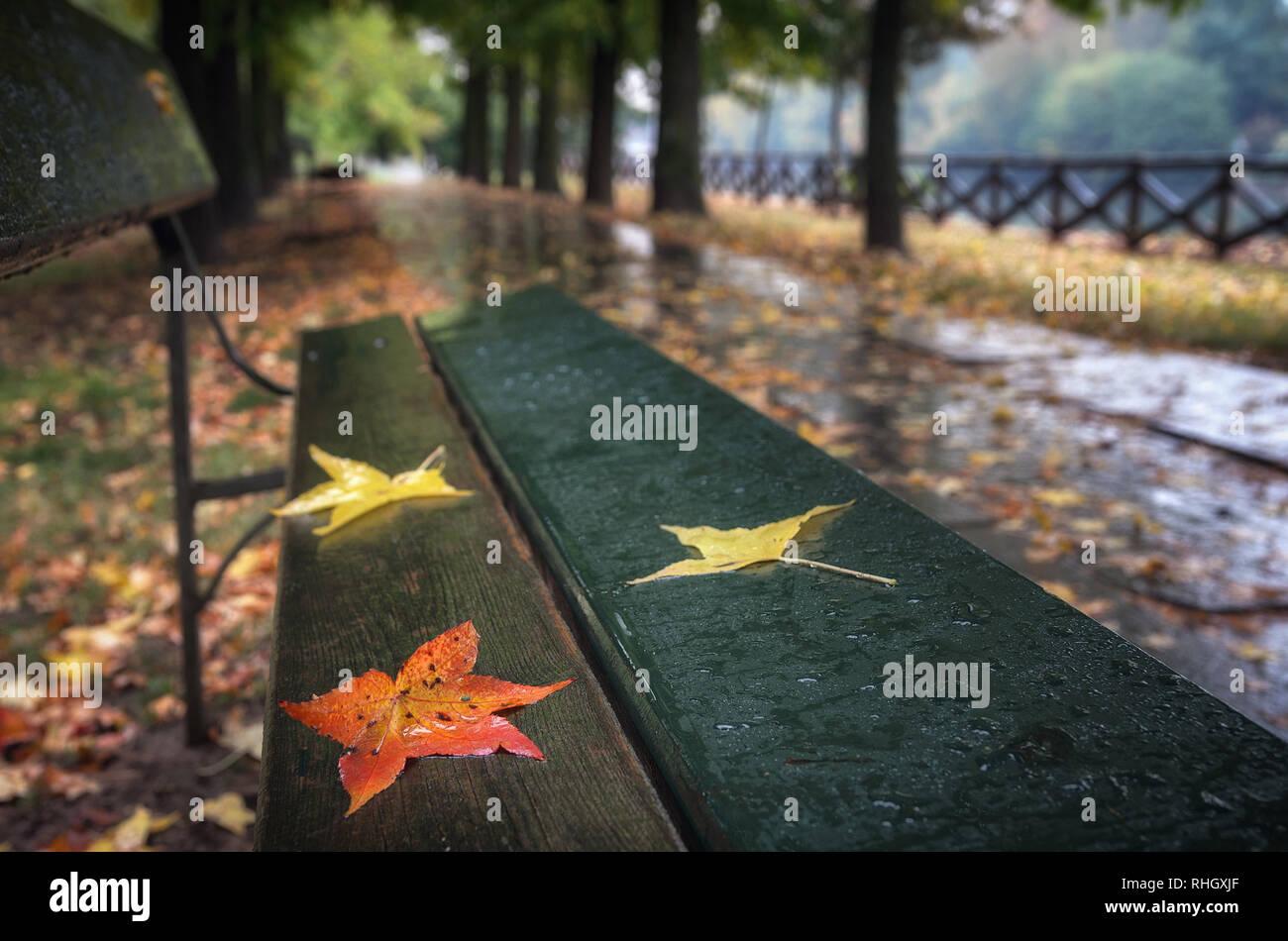 Colores del otoño las hojas en un banco en un parque Foto de stock