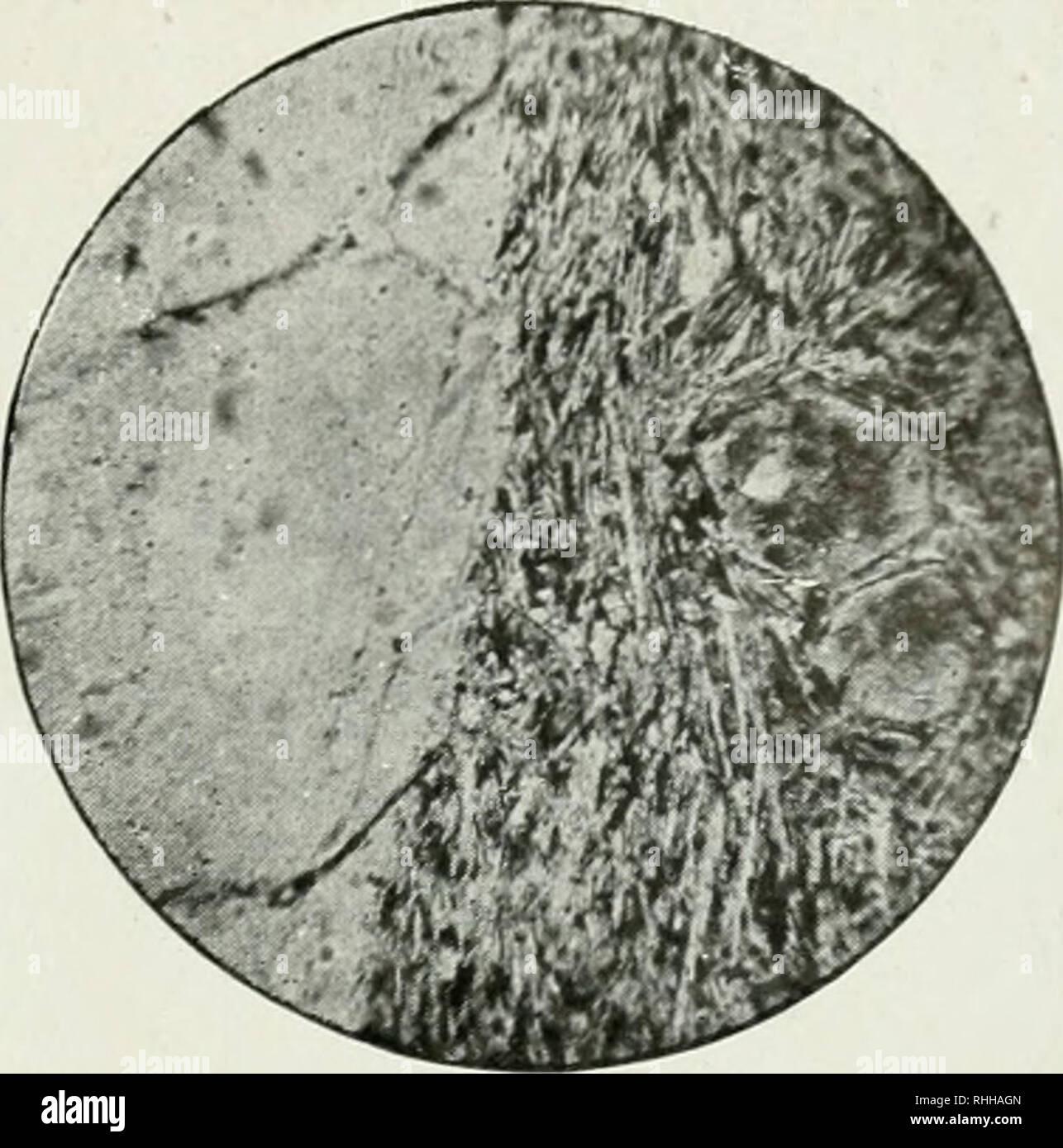 42c2a2d1ef2 59 de nefeltiia Agregados cristalinos. Ou em haiujna Xoseana cris- tais  alterados e com pequena frequência. Raros cristais incompletos de titanita