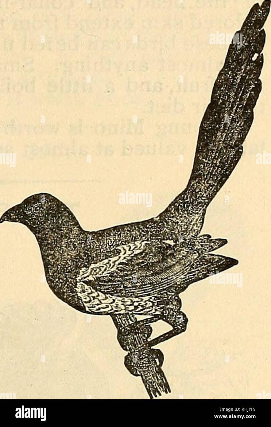 La Empresa De Alimentos De Aves Del Libro De Los Pájaros De