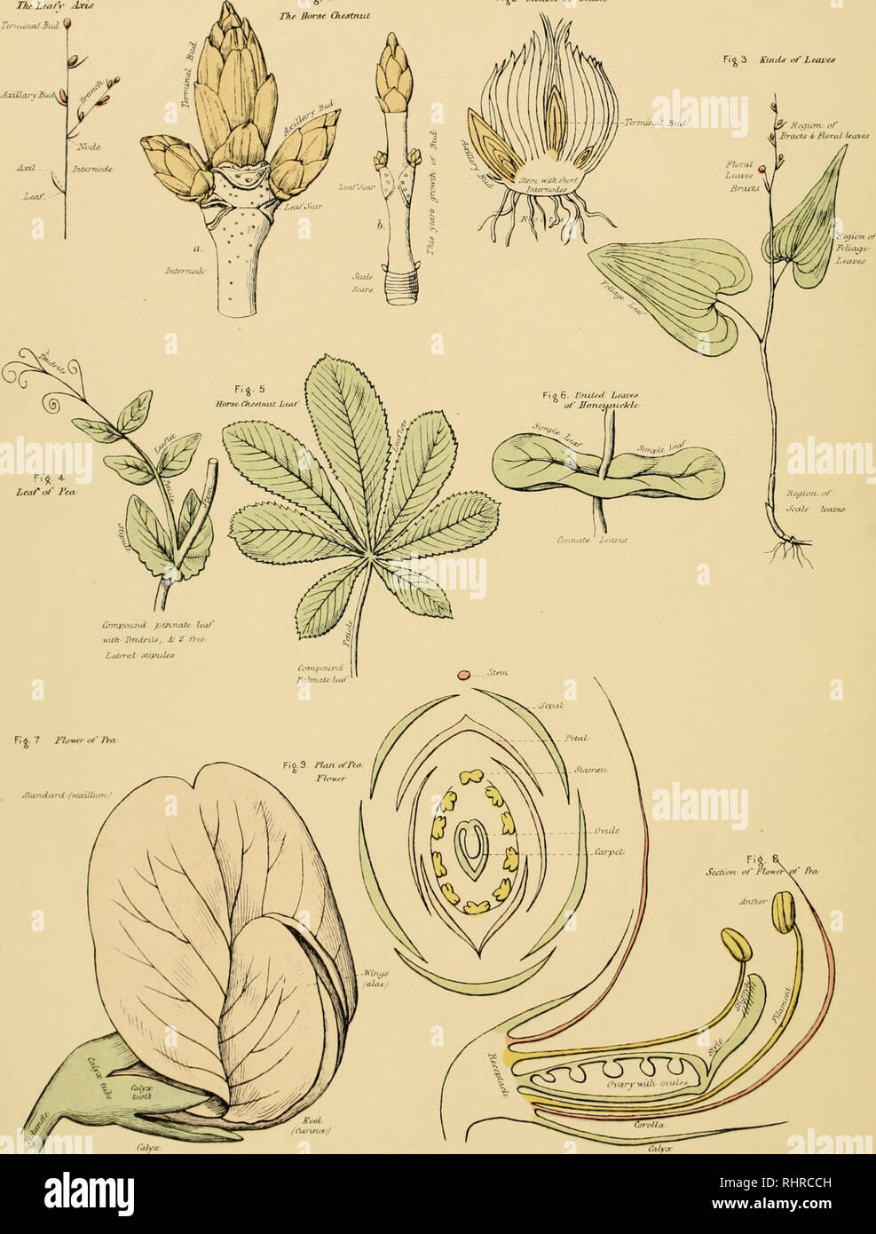atlas biol�gicos: una gu�a para el estudio pr�ctico de plantas y  animales  historia natural