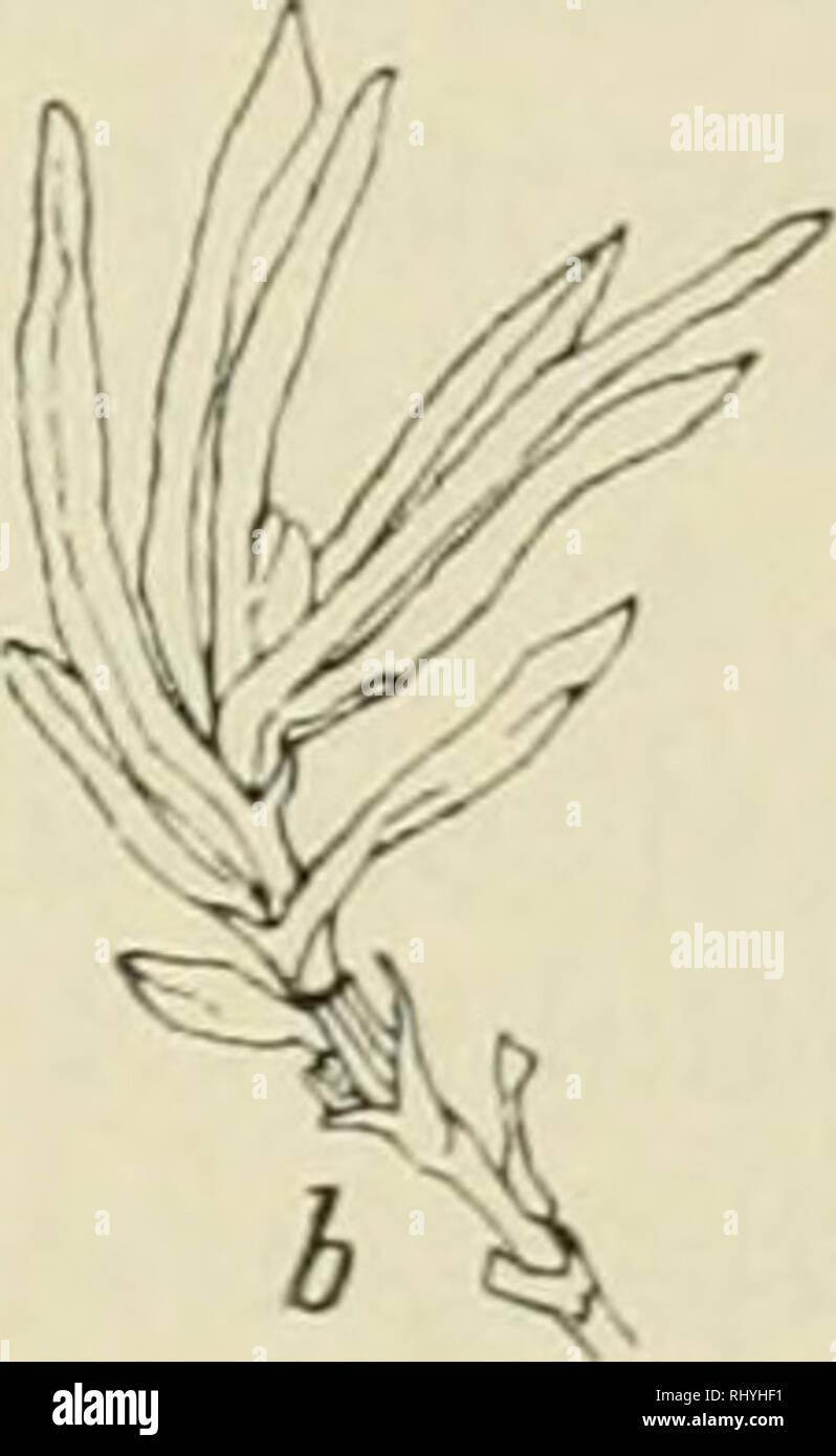 Knoten in der achsel