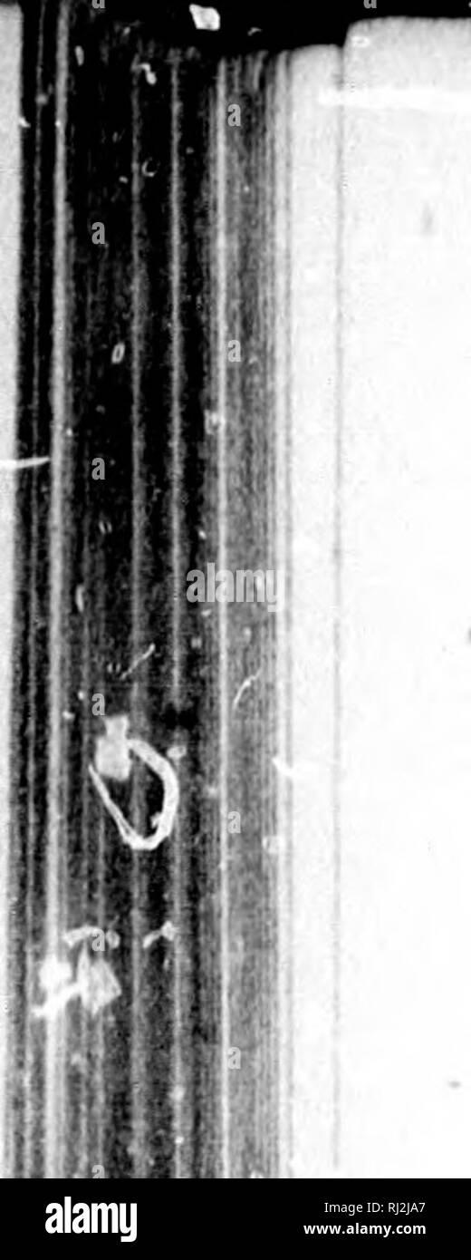 """. Cours élí©mentaire de botanique et flore du Canada à l'usage des maisons d'émicroforme [educación]. Botanique; Plantes; Botánica; las plantas. I 240-GLUMAOÃBS MONOOOTYLÃDONBS. ¢ 2. I. OBTCU. E. obtuta, Schultes. Estilo 3-rarement partii (2-pai'tit) ; chaume de 8-14 pouces ; épi globuleux ovoïde. María©jaulas. Juin-AoÃ""""t. 3. . AOIOVLAIRS. m. aei ulariSf R. Brown. Estilo 3-partit ; tige filiforme de 1-8 pouces de Haut. Bords vaseux des eaux. Juin-AoÃ""""t. 4. B. pausse-prAle. E. equisf.toidea, Torrey. Estilo 3-partit ; chaume de 2 pieds, entrecoupé d'im grand nombre de nÅuds. €aux basses. â""""¢. Foto de stock"""