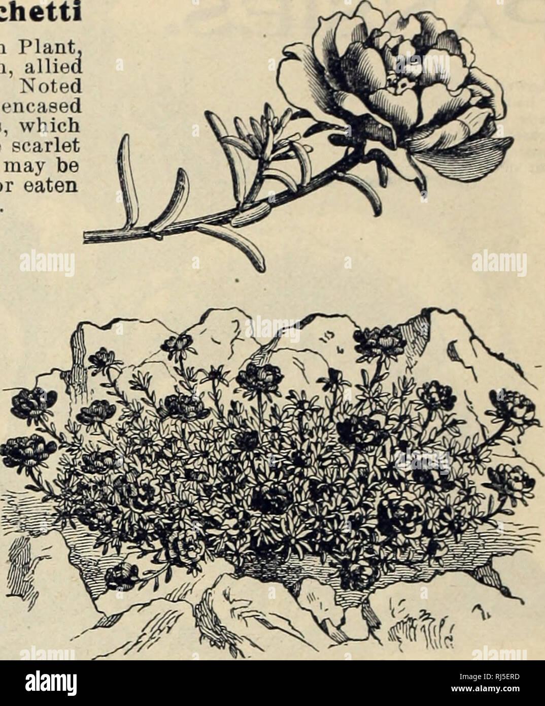 744fcf426 Los catálogos de semillas de flores  semillas  catálogos Catálogos de  semillas de ...