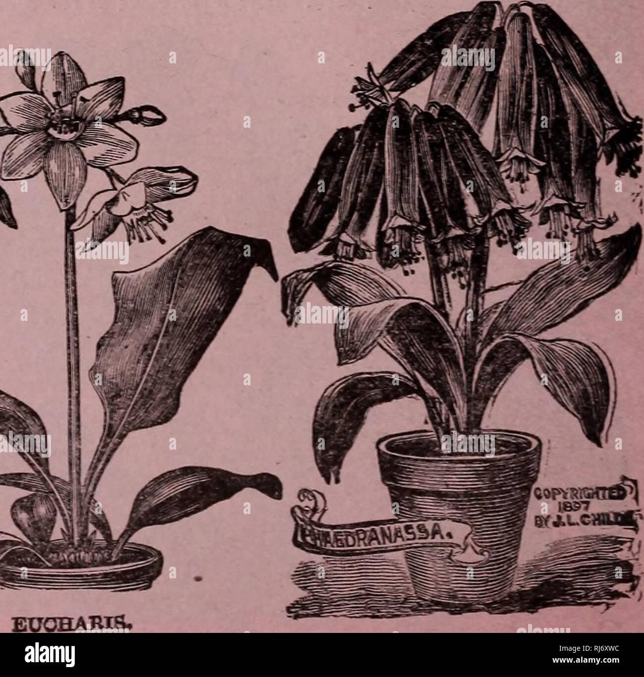 Childs Raras Flores Verduras Y Frutas Catálogos