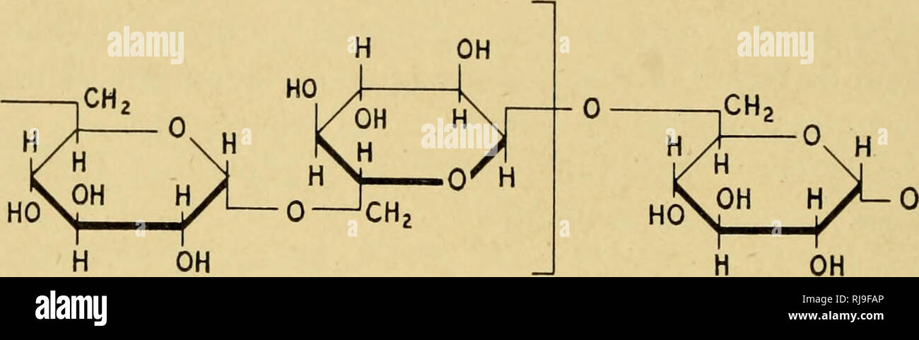 Las Actividades Químicas De Bacterias Las Bacterias 120