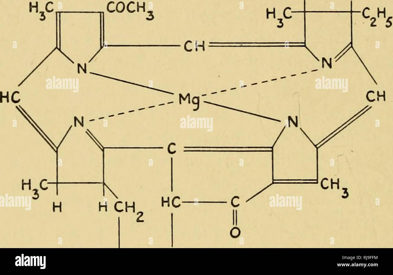 Las Actividades Químicas De Bacterias Las Bacterias 86