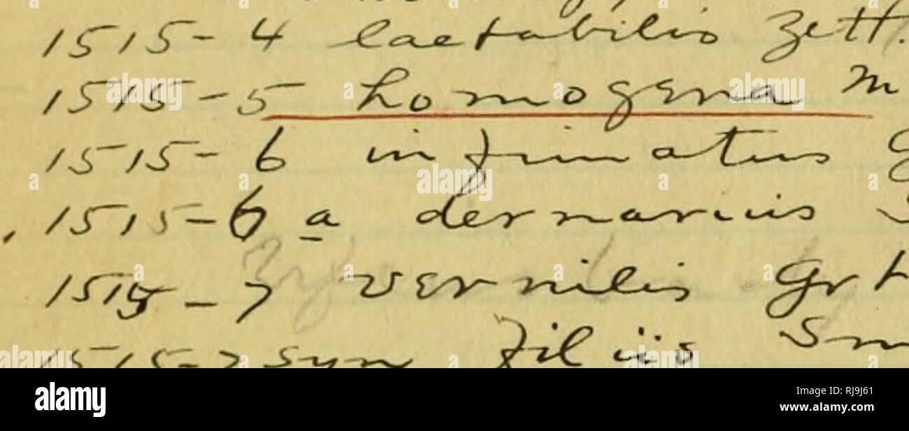 """. Lista de comprobación de los lepidópteros de América boreales. Los lepidópteros. /S~~/^^y (P^^^ ^^c '-t c •i-O-M ^/ /7 ^ / / faJUr*utl^^ 7h o^iA- ^f<fS-fJ ,. '^t/r"""" /^""""Sf ^-*-^%/ /6/ i --- ;> -J. -Y v^ ^^ /^T-(p - ( Co->^^-n'T.C~fo-jt^ ^^. (I-f i^^^ Ai-tc. ^. U^<xyiXe//Ct '©^ ,yt^ <5^^ """"'i-B ^ vsr _^^/iV_x^ -±/'. Por favor tenga en cuenta que estas imágenes son extraídas de la página escaneada imágenes que podrían haber sido mejoradas digitalmente para mejorar la legibilidad, la coloración y el aspecto de estas ilustraciones pueden no parecerse perfectamente a la obra original. Barnes, William, 1860-1930; McDunnough, James Hall Foto de stock"""