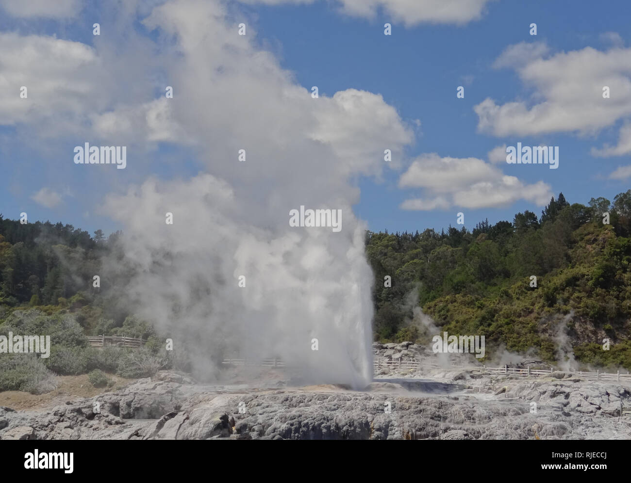 "Los géiseres de Rotorua, Nueva Zelanda, Isla Norte, Valle termal Whakarewarewa, Geiser Pohutu, ""Big Splash"", ""explosión"", chorros hasta veinte veces cada día Imagen De Stock"