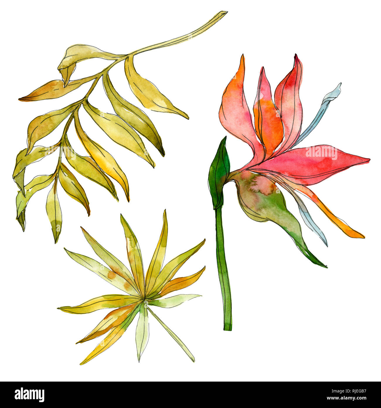 Botanico Floral Flores Tropicales Planta Exotica Leaf Aislados