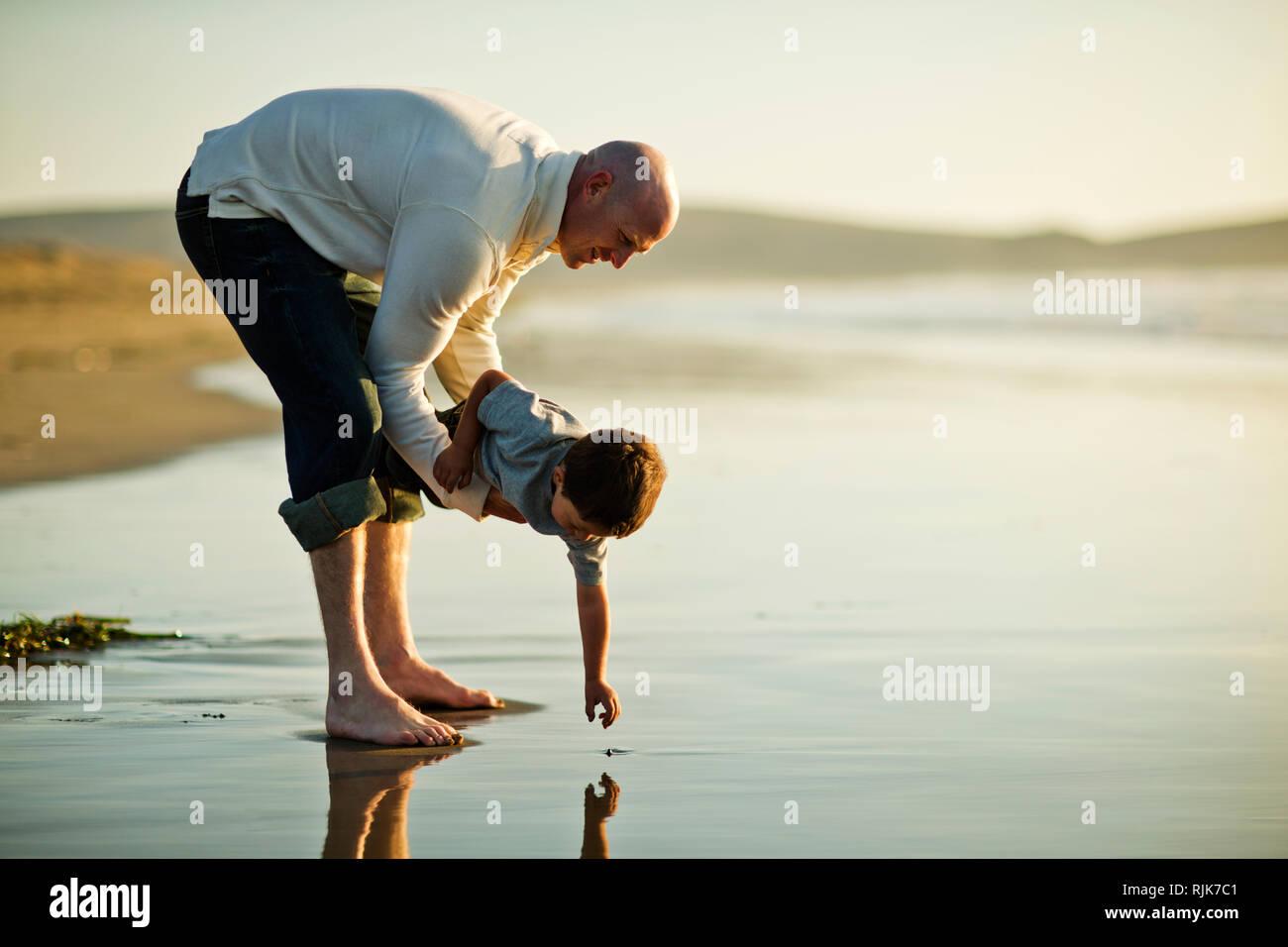 Padre sostiene a su hijo mientras él alcanza para algo interesante que ha visto en la arena de la playa. Imagen De Stock