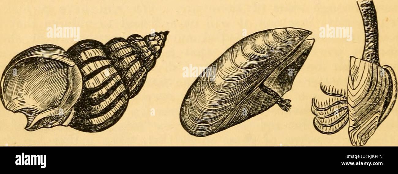 Preciosas Conchas Su Naturaleza Estructura Y Utiliza