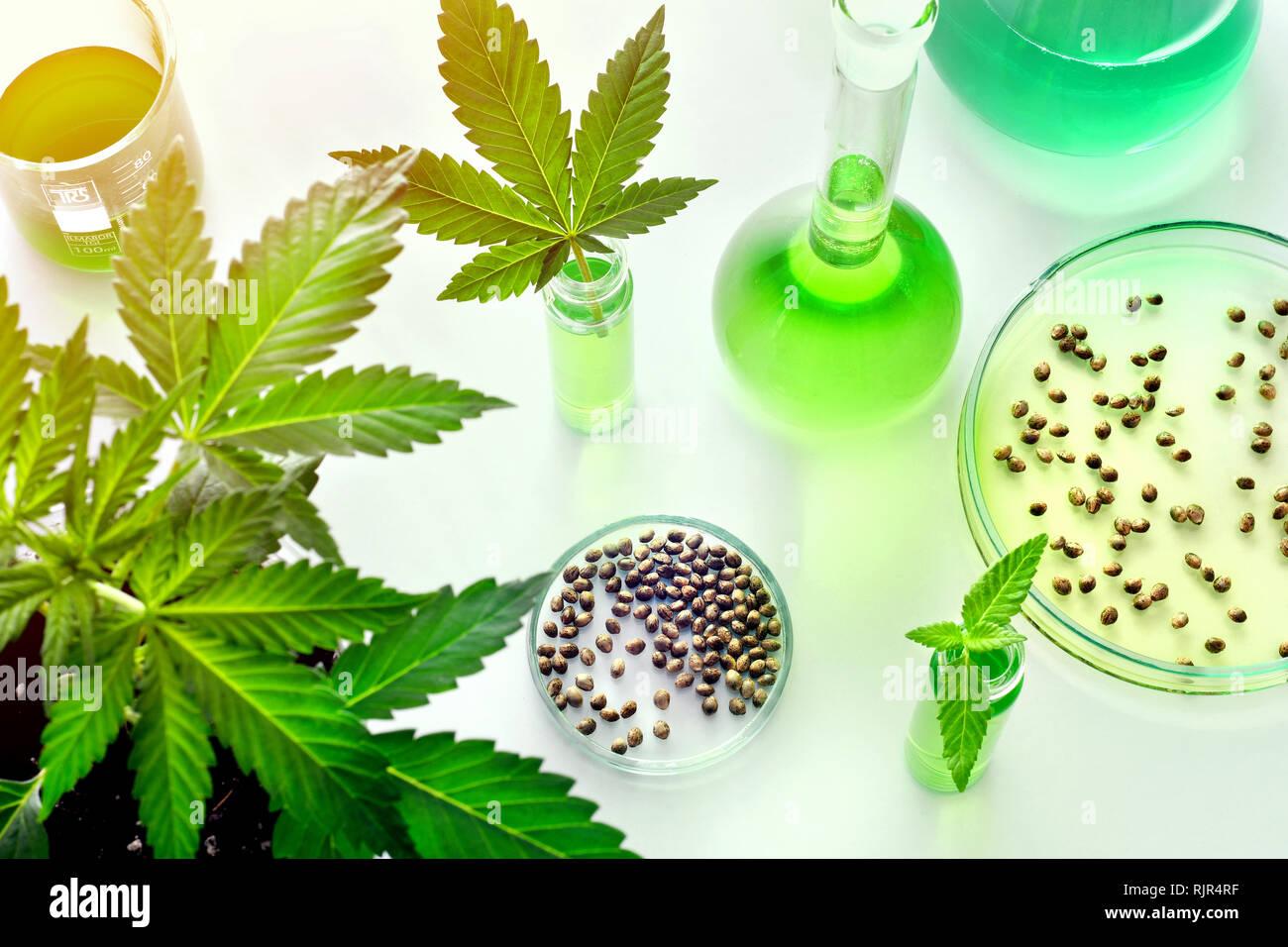 La investigación científica del cannabis para uso médico en medicina, biotecnología concepto Imagen De Stock