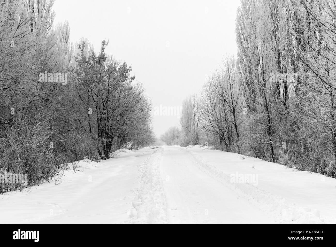 Árboles de nieve de invierno, Año Nuevo, el estado de ánimo. Foto de stock