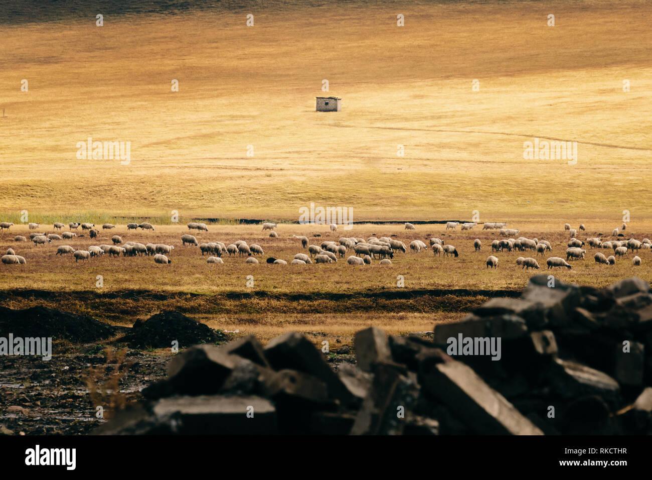 Campo de ovejas en Highland acantilados rocosos Finca hato verde hierba Hut animales salvajes en profundidad de campo. Foto de stock