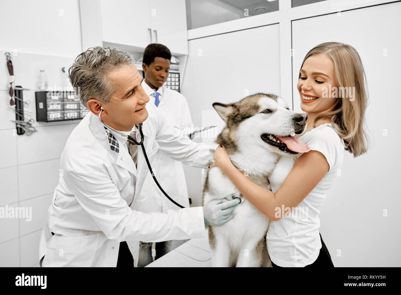 Mujer, feliz propietario de malamute abrazando perro maduro y sonriente, doctor examinar y diagnosticar el animal con el estetoscopio en la clínica privada. Ayudante africano de pie detrás. Foto de stock