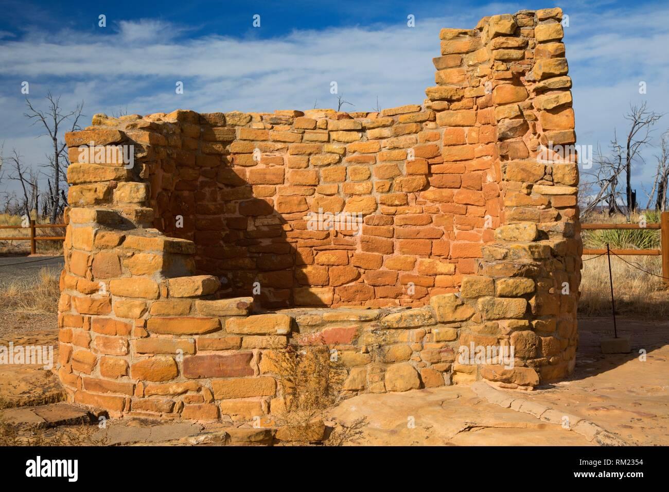 Cedro Torre, Parque Nacional de Mesa Verde, Colorado. Imagen De Stock