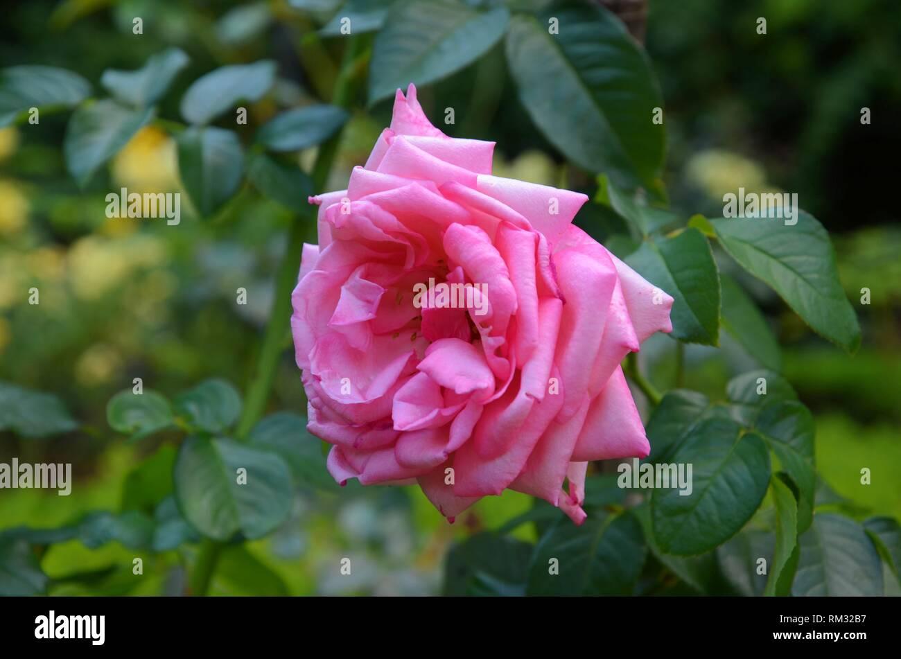 Solitario y vibrante, esta es la vida de las flores en el jardín de ...
