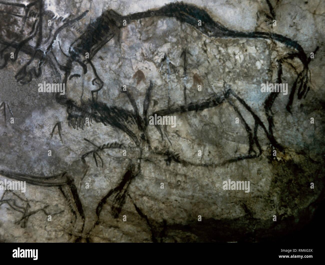 Cueva de Niaux. Salón negro panel. Pintura de los bisontes, ejecutados en un estilo de resaltado en negro. A finales del Paleolítico Superior. La cultura Magdaleniense, c. 13.000 AEC. Ariege, al sudoeste de Francia. Europa. Imagen De Stock