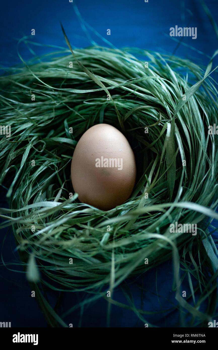 Recién Al Animal De Huevos En El Nido Granja De Huevos De Pollo
