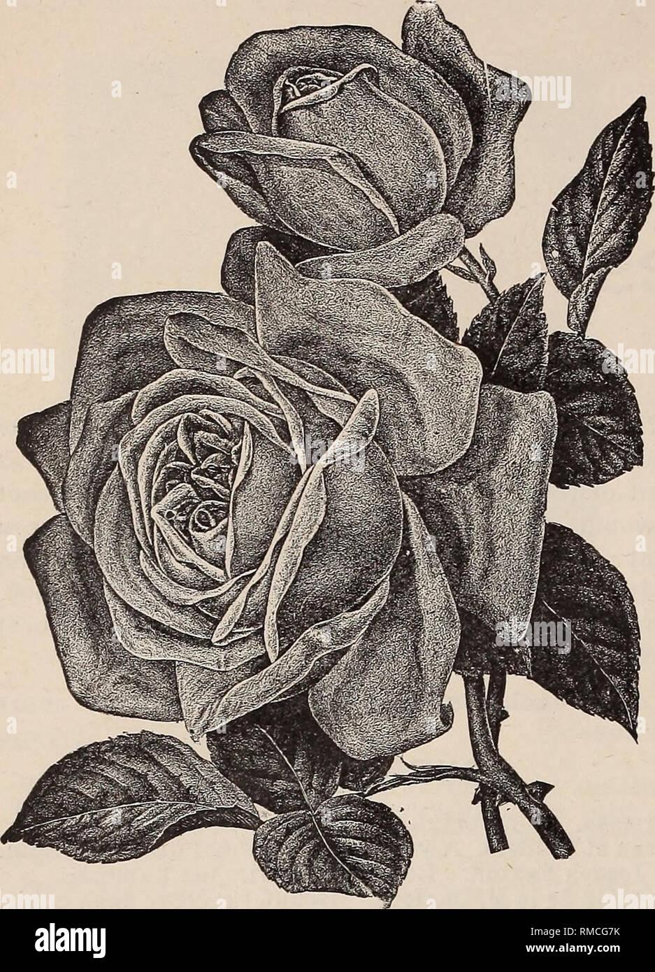 Ilustrado Anual Y Catalogo Descriptivo De Nuevo Las Plantas Raras Y Hermosas Los Catalogos De Plantas