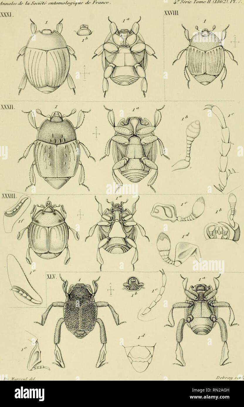 """. Los Annales de la Société entomologique de France. Los insectos; Entomología. 1""""/.- Jónico- //. tl,1t!2). /'/.. D-I,r.7,, ..ncMarsfii culf./. HlSh'/'U/l. PI. A. (Sii/'p/C٭ éiiwntJ-iircs Pcioriirii XXVlll,^- </I' Al. .XI1 /'/uKronohu^' XXXI riu/l/CEI/i.^-. XXlIi Scu-A/ts. Xl.V 7'crti/>(/'.•. Imp Jkni^tt. J R Ifu/n^n . Pai-ij,. Por favor tenga en cuenta que estas imágenes son extraídas de la página escaneada imágenes que podrían haber sido mejoradas digitalmente para mejorar la legibilidad, la coloración y el aspecto de estas ilustraciones pueden no parecerse perfectamente a la obra original. Société entomologique de France; Société entomo Foto de stock"""