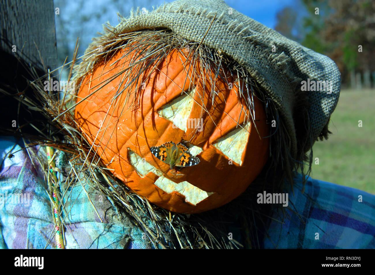 Primer plano de la cara de espantapájaros muestra una polilla Checkerspot plateado sentado en el espantapájaros's Pumpkin cabeza tallada. Foto de stock