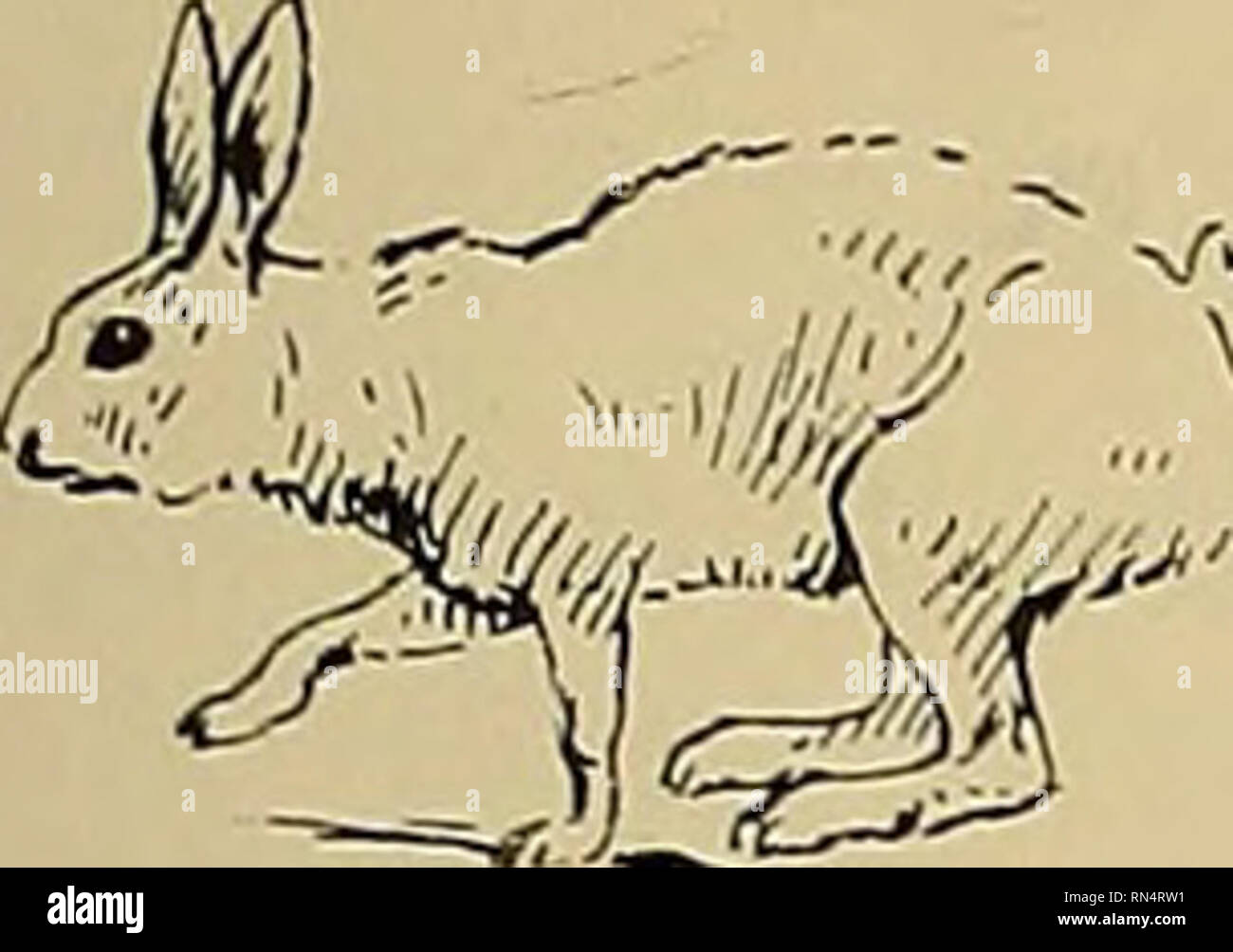 La Vida Animal Y El Mundo De La Naturaleza Una Revista De Historia Natural Pequenos Mamiferos