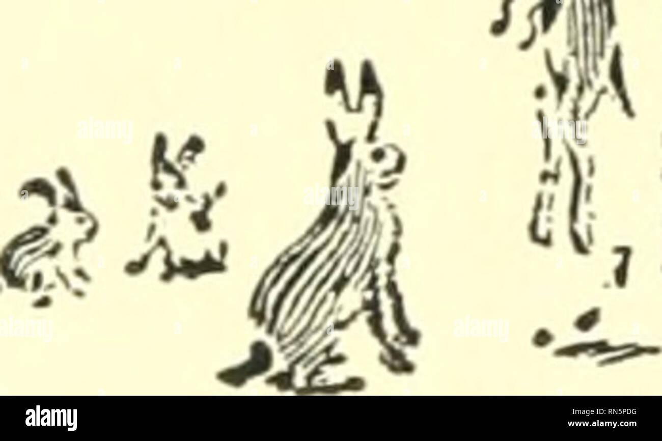 . Héroes de animales; siendo las historias de un gato, un perro, una paloma, un lince, dos lobos &Amp; un reno y en la elucidación de la misma más de 200 dibujos. Los animales, historias y leyendas. Poco Warhorse quinientos de los veloces y sabia había sido seleccionada, y no por cualquier otro medio, un infalH- ble, pero la más sencilla y readiest. Estos quinientos, estaban destinados a ser cursarse por galgos. La creciente masa de más de cuatro mil fueron salvajemente dada al sacrificio. Quinientos cajitas con quinientos brillante-eyed Jack-conejos fueron puestas en el tren ese día, y entre ellos estaba poco Jack W Foto de stock