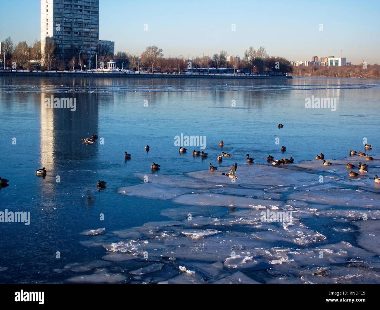 Parque a la orilla del río Moscú en invierno, distrito de impresoras Foto de stock