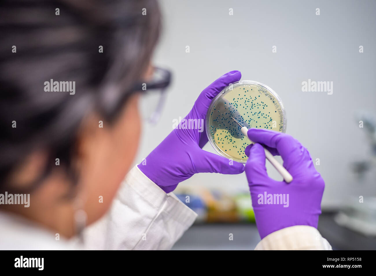 Mujer científica / microbiólogo examinar la placa de cultivo bacteriano Foto de stock