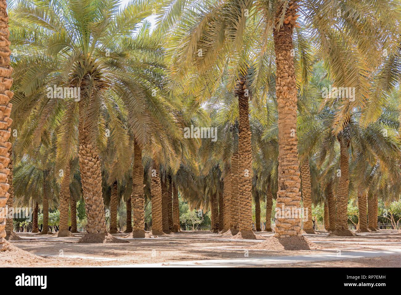 Palm Tree Park en Riyadh, Arabia Saudita Imagen De Stock