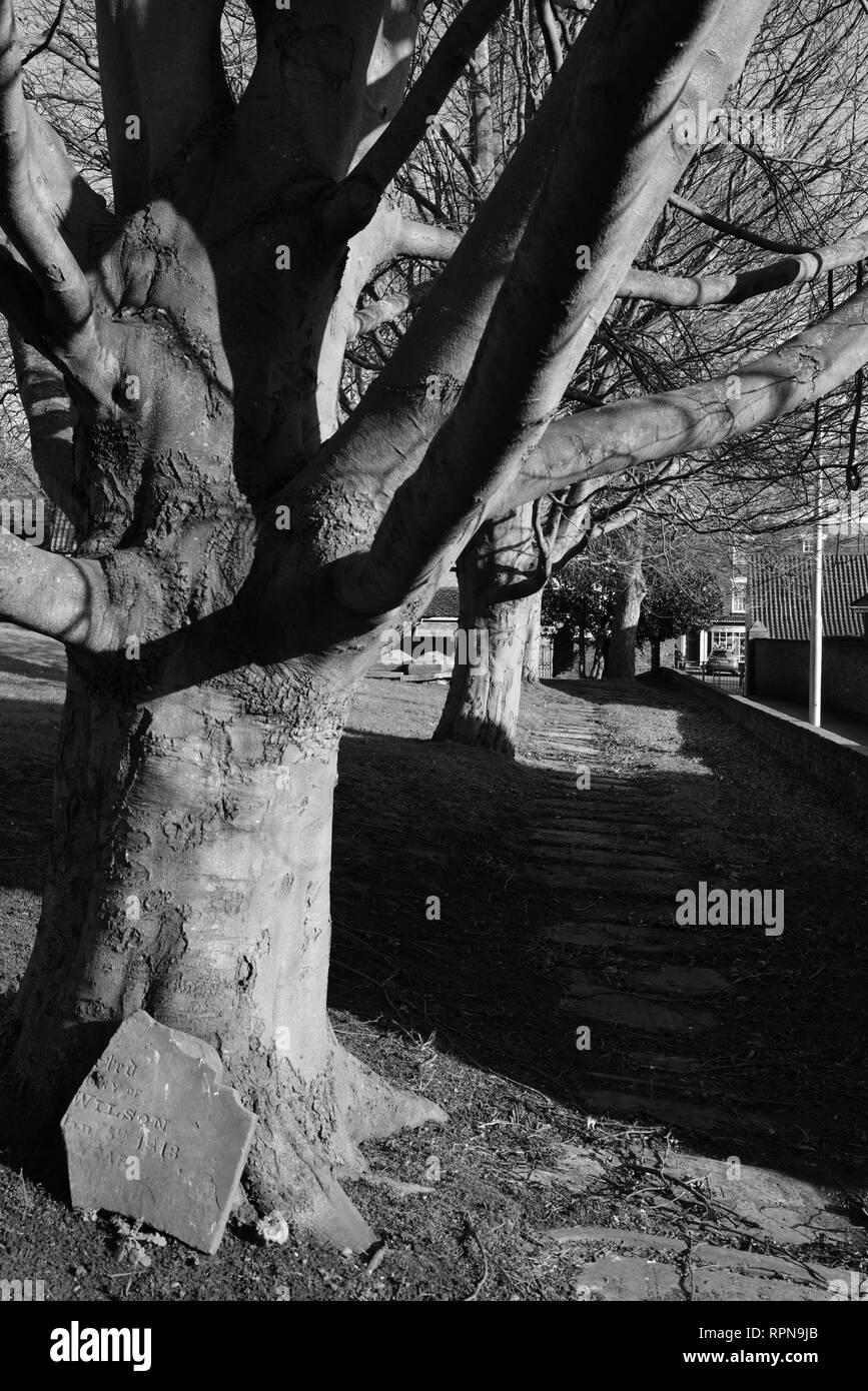 Los árboles en el cementerio de San Agustín, Hedon, East Yorkshire, Inglaterra Foto de stock