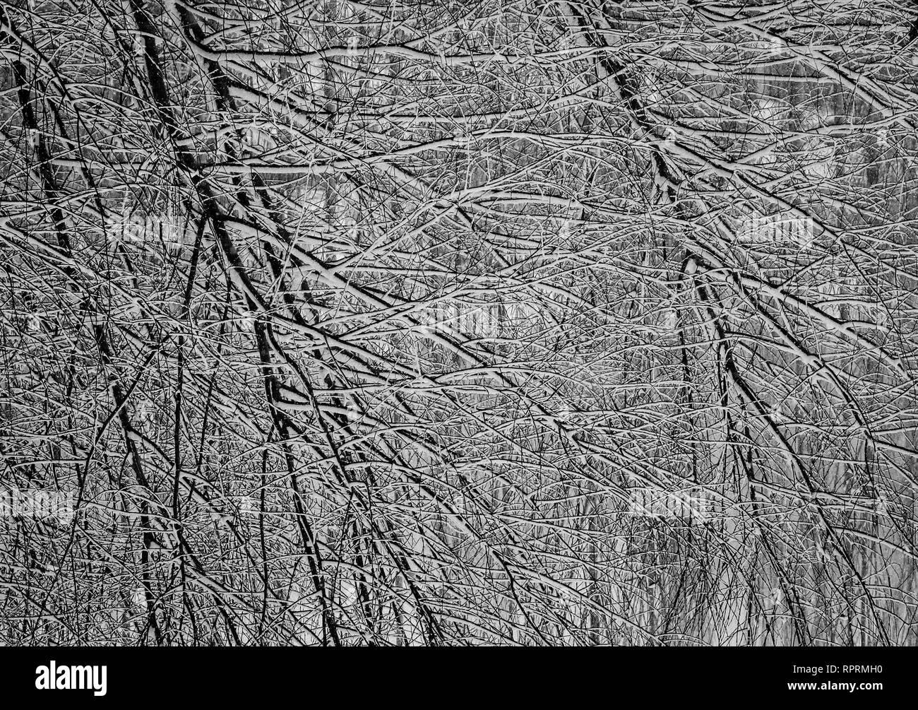Ramas de árbol abstracto - Fotografía Artística Foto de stock