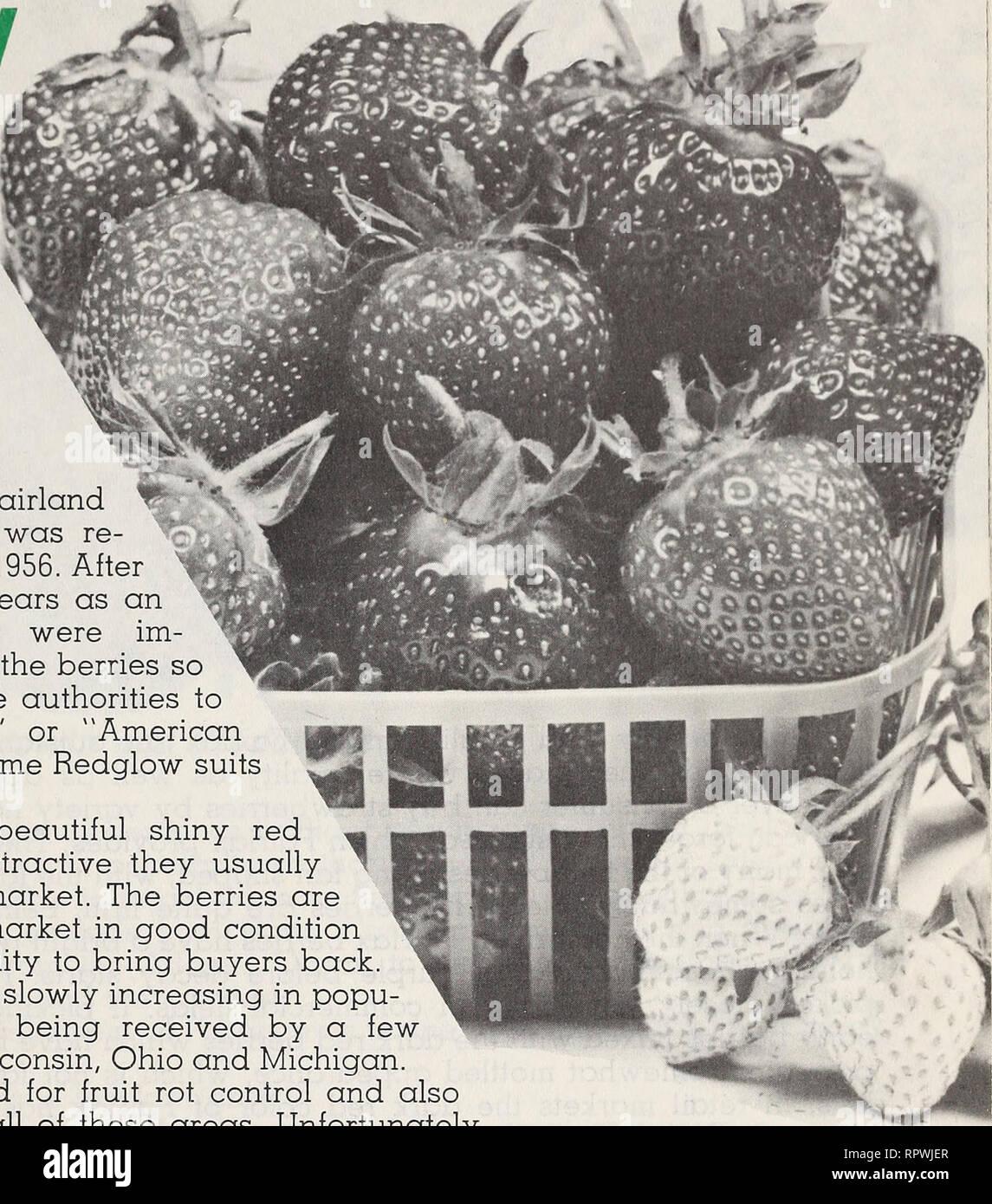 Allen en 1962 Libro de bayas. Viveros (horticultura) Catálogos de  Salisbury dd6c4e15136c