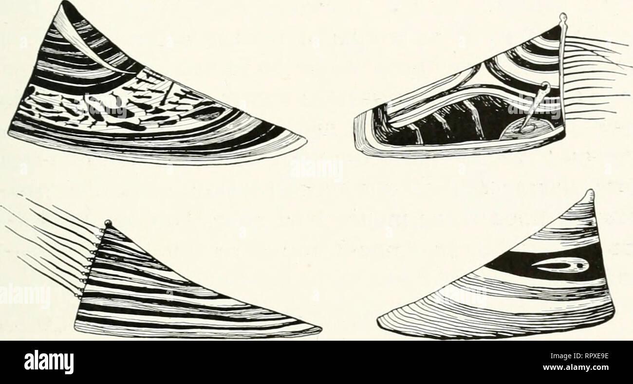 f9edd9a66 . Islas Aleutianas; los esquimales del Pacífico norte. Aleutianos. Fig. 7.  Sombreros de madera que muestra varios ...