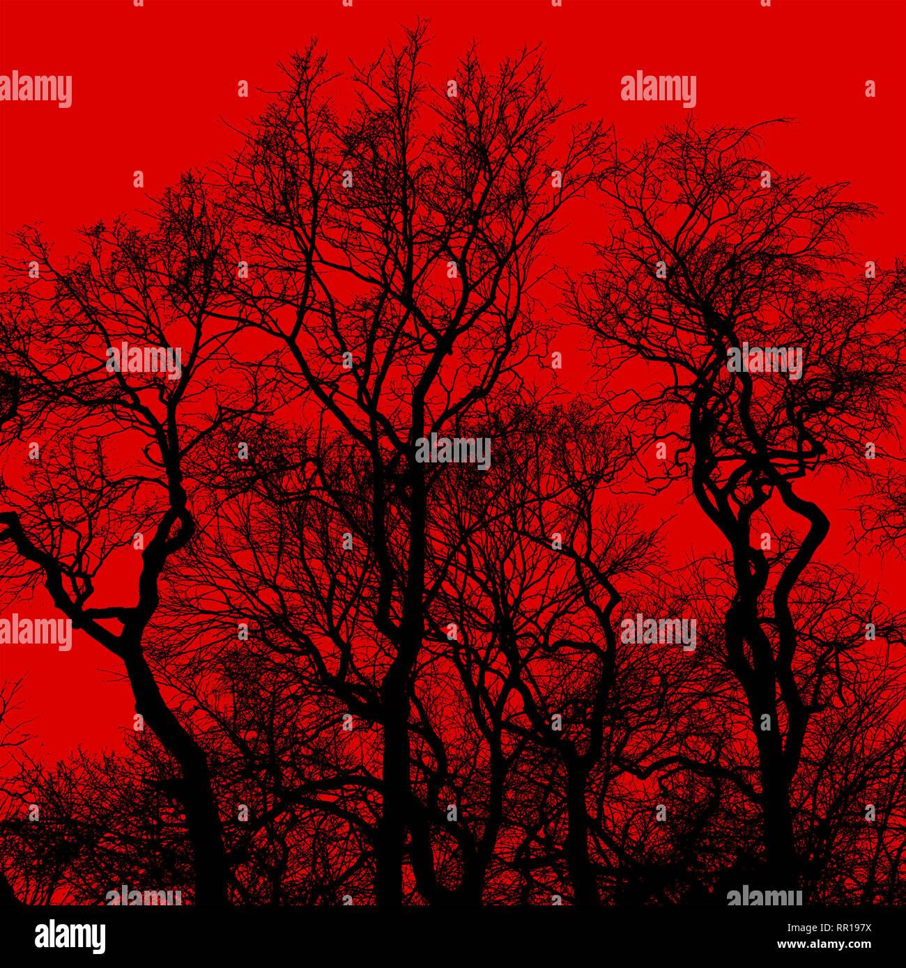 Silueta de bare árboles con ramas entrelazadas contra el fondo rojo brillante Imagen De Stock