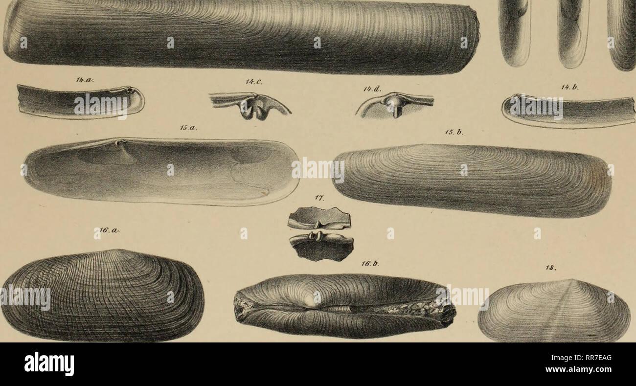 ". Der Geologischen Abhandlungen Bundesanstalt. Geología y Paleontología. ^ Sty Biblioteca de la Academia de Ciencias de California. flnr/ Scharm rr // Un'/t/ //ez // ///// Lit/i ii r/r// '///?../////// Staatsdrutkr.ru /. (Vrir/rir/rf/RR/fnir //riri'.v) //:s/i//r/r/. '.'. ?. 17, riinif/rf/RI /'"",'/ '? ?'. Fraxfroi/inr/rrt intermedia /////////////. '/ '/. Gastrochaena dubia Penn/, Pao.,5. ?/-/. Teredo Spenglerpag Norvegica.fi, 8.S>. J'gf/)/>lirir//t.rtar vali.v Turloti pag.S. /O.//. Solen inir/i'/III L//////'en/. /''. /'../:≫. Solen yii/ifirrr/i/i'.f Et'chnt.pari. '/4. /'/ H'n.yi.y FI/SI/ri Foto de stock"