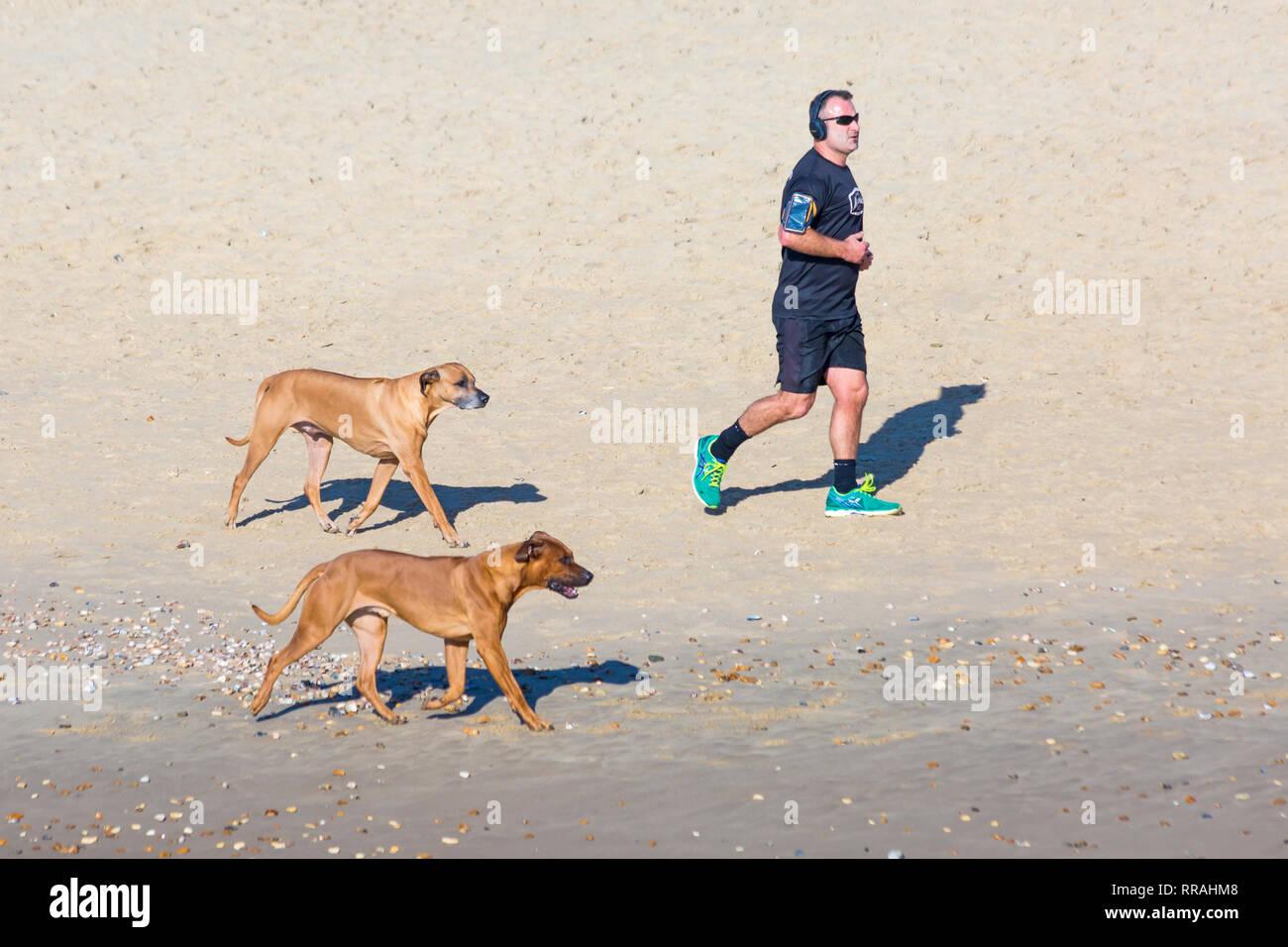 Bournemouth, Dorset, Reino Unido. 25 Feb, 2019. El clima del REINO UNIDO: otro hermoso día soleado, cálido en Bournemouth como visitantes disfrutar del sol en la playa, en el día más caluroso del año hasta ahora y caluroso día de febrero nunca. Hombre corriendo a lo largo de orilla con perros. Crédito: Carolyn Jenkins/Alamy Live News Foto de stock
