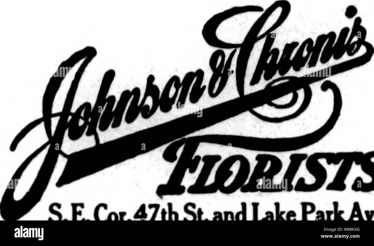 """. Floristerías' Review [microforma]. La floricultura. Los hogares de Chicago flores esquina noroeste nuestro lema WJ""""J. A™>"""" """"un AJ™. """"SttM satisfacción. Calidad y servicio"""". fmuusTS .LG>r.47St y Lake Park Ave. EVANSTON.IIL. ^ también en el bucle ^ V :^^fMA Mj^^ mjj n^0^ UH wM^Sti^^'^ ^Jl TSEJMamsSt. CU I r* r* /^ ENVÍE SU ri 1 ^ Una Li W OROERSTO cjA 'ensei >RAST P LOR I ST Graoeland teléfono 1621 8336 Lincoln Avenae CHICAGO BOH flor; Miembro F. T. D. ANNO FLORAL N 75 de la empresa E. Monroe St. flores para todas las ocasiones Lake View 1121 3912 North Clark St.. CHICAGO, ILL de Ottawa. LOHR'S GREENHO Foto de stock"""