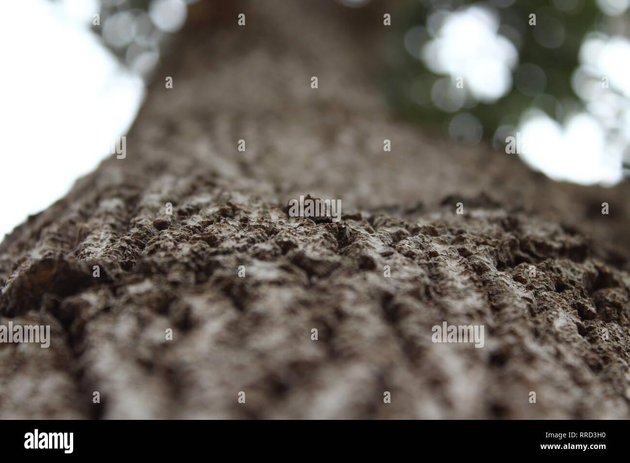 Precioso árbol, naturaleza, vida silvestre. Imagen De Stock