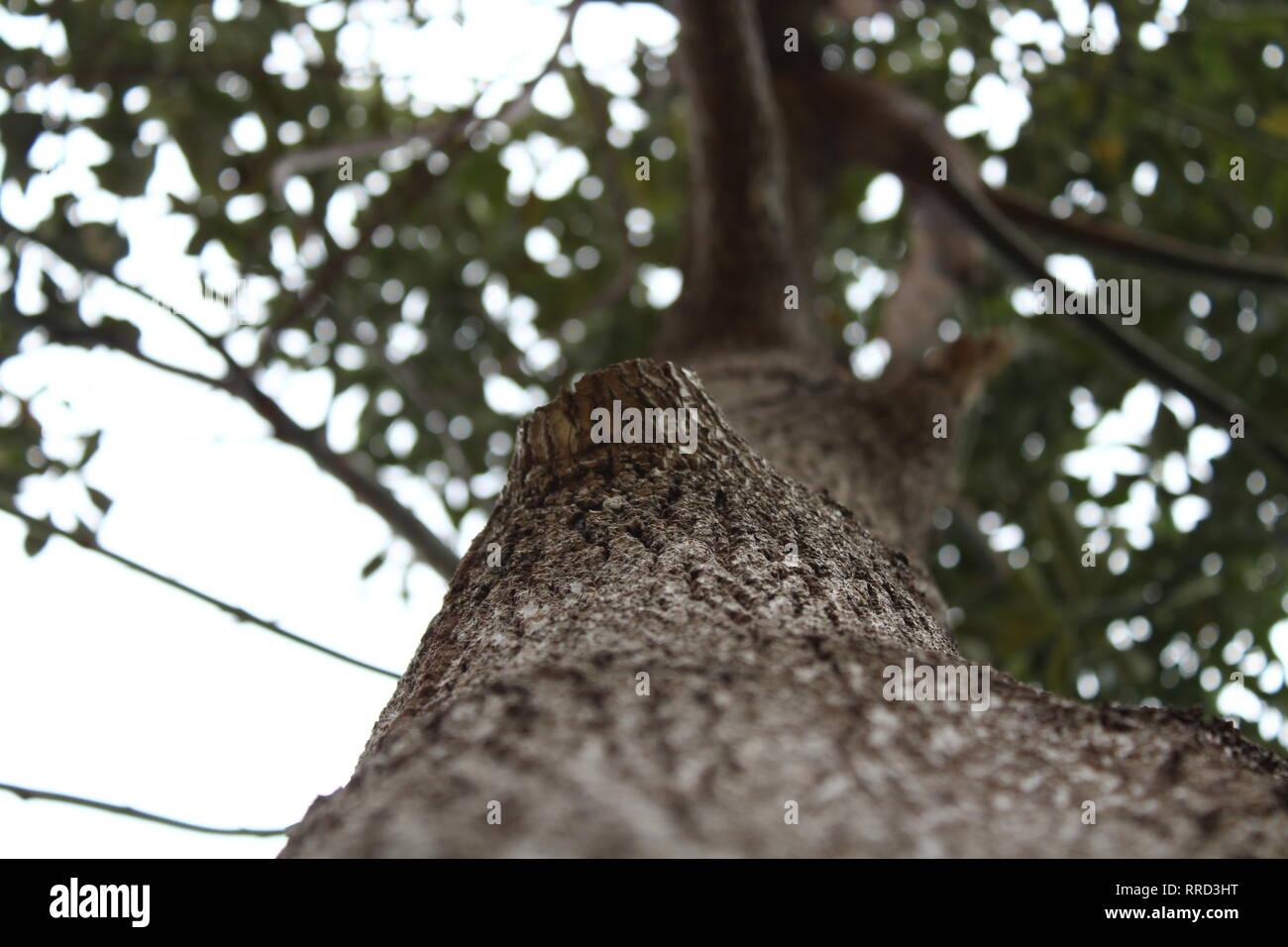 Precioso árbol, naturaleza, vida silvestre. Foto de stock
