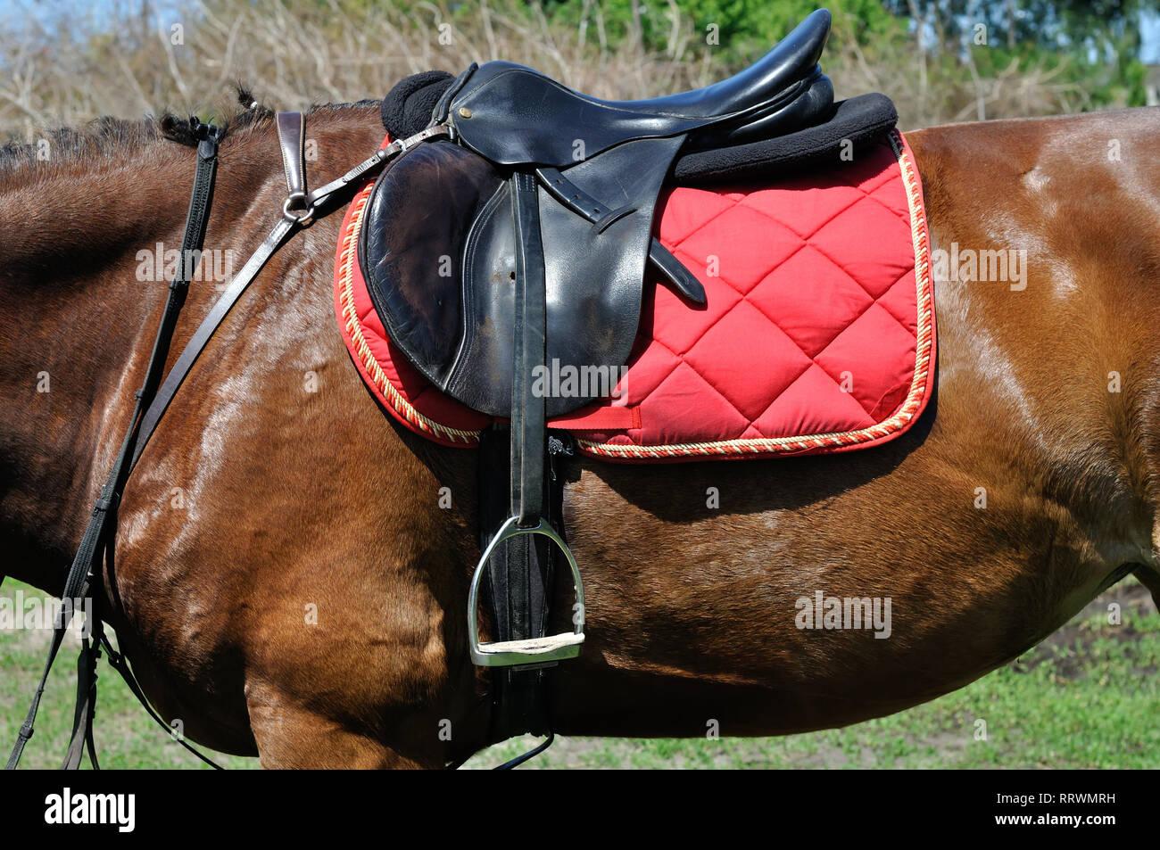Cierre de un arnés de caballo, vista lateral Foto de stock